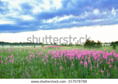 beautiful rural landscape with the  blossoming meadow and fog - stock photo