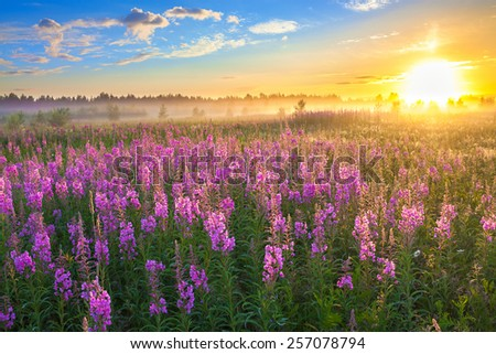 beautiful rural landscape with the sunrise  and  blossoming meadow  - stock photo