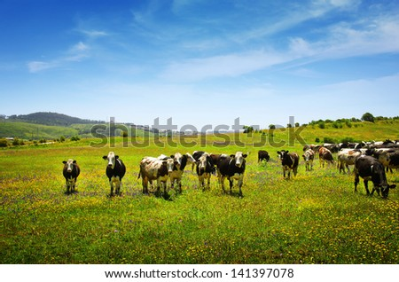 Beautiful rural landscape with vast green field and a herd of cows pasturing - stock photo