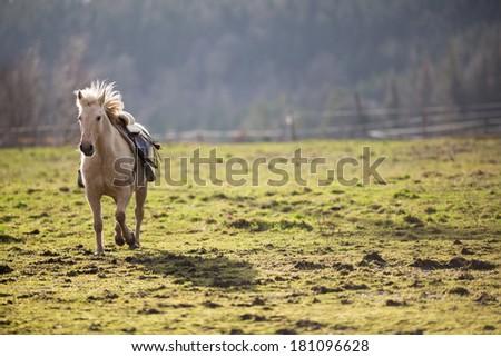 Beautiful, saddled horse galloping towards you - stock photo