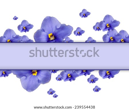 Beautiful saintpaulia flowers and card with space for your text isolated on white - stock photo