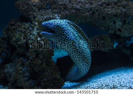 Beautiful salt water aquarium fish - stock photo