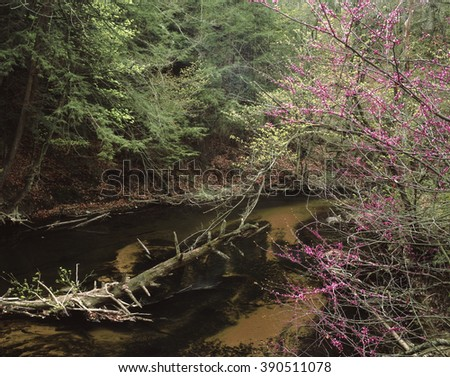 Beautiful sand bottomed Sand Creek flows through Aman Park in Grand Rapids, Michigan, with a Redbud in prime bud out on it's shore. - stock photo