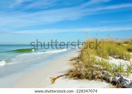 Beautiful Sand Dunes and Sea Oats on the Coastline of Anna Maria Island, Florida - stock photo