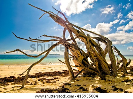 Beautiful sandy hot tropical beach with dry dead tree on blue sky and clouds - stock photo