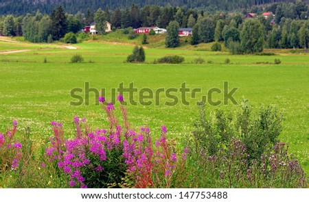 beautiful scandinavian rural landscape with purple fireweed in foreground - stock photo