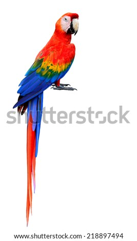 Beautiful Scarlet Macaw Bird with bare feet isolated on white background - stock photo