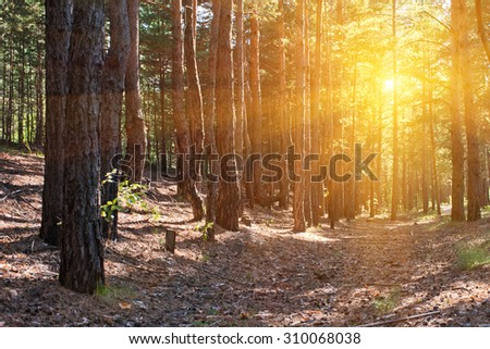 Beautiful scene in the forest with sun rays and shadows - stock photo