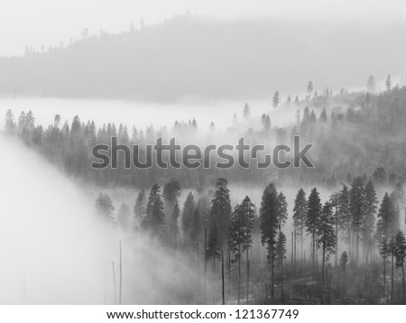 Beautiful scene of a forest covered by low clouds in Yosemite National Park, California.