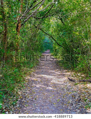 Beautiful scene of a hiking trail in a jungle like forest in the Florida Everglades