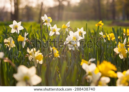 Beautiful scenery in a city park (blossoming flowers in foreground, photo was taken in evening warm light) on a sunny spring/summer day - stock photo