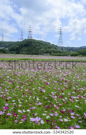 Beautiful scenery of cosmos flowers with high electric pole in a sunny day