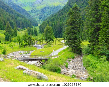 Beautiful scenic green alpine wood forest in Brambana valley, Mezzoldo, Bergamo Province, Lombardia, Italy.