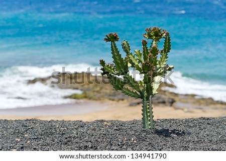 Beautiful sea and cacti on Lanzarote - stock photo