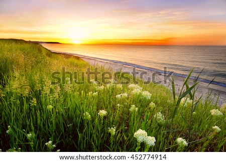 Beautiful sea bay at sunrise. In the foreground grass and flowers on the beach. Beautiful sky with different colors of flowers and the sun rising over the horizon  - stock photo