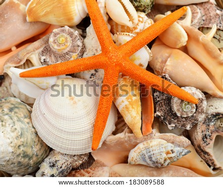 beautiful sea shells close-up background  - stock photo