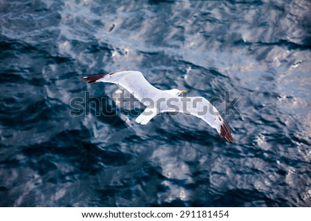Beautiful seagull soaring in the blue sky  - stock photo