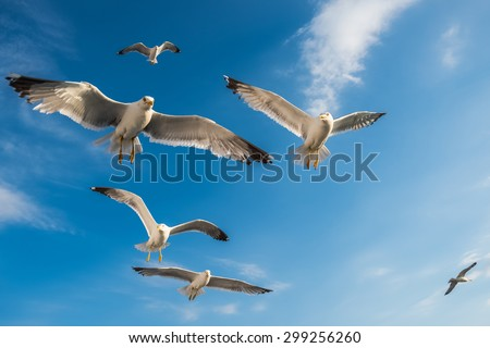 Beautiful Seagulls flying in the sky - stock photo
