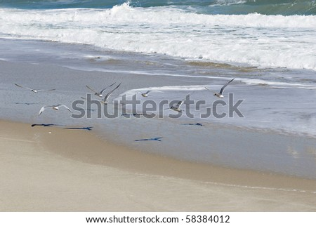 Beautiful seagulls flying over the shoreline on a sunny day - stock photo