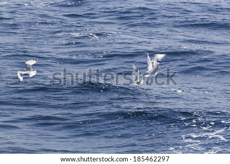 Beautiful seagulls over the blue sea