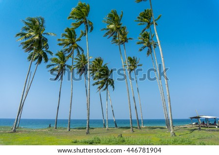 beautiful seascape and coconut tree with blue sky background