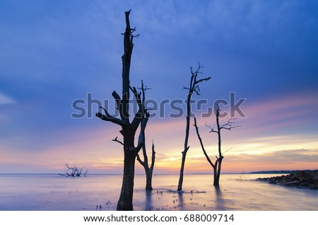 Beautiful seascape, silhouette dead mangrove tree over stunning sunset background ideal for holiday and tranquil concept
