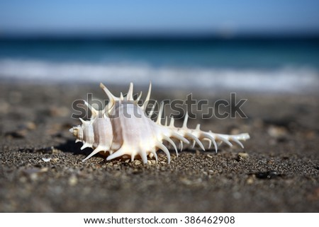 Beautiful seashell on the beach, close-up image (shallow depth of field) - stock photo
