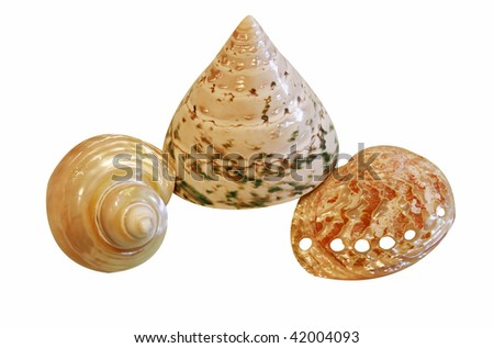 beautiful seashells - stock photo