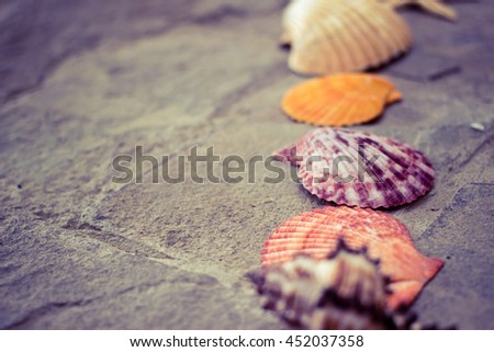 Beautiful seashells on the stone floor. Background with different seashells. Shallow depth of field. Toned image. - stock photo