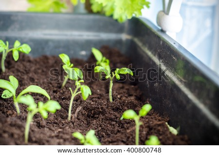 beautiful seedling - stock photo