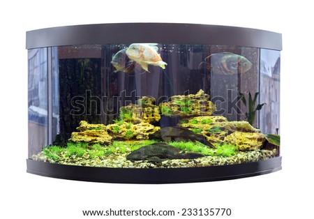 Beautiful semi-circular aquarium with tropical fish - stock photo