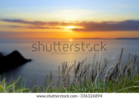 beautiful serene sunset over loop head with the wild tall grass on the wild atlantic way in ireland - stock photo