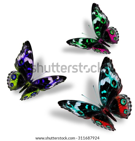Beautiful set of flying Blue, red and pink butterflies in fancy color profile with nice shadow beneath on the white background - stock photo