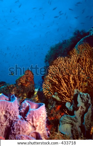 Beautiful shallow coral reef showcasing purple vase sponges,gorgonians,and various corals
