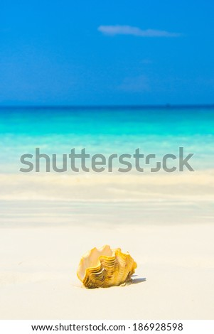 Beautiful Shell Seascape Divine  - stock photo