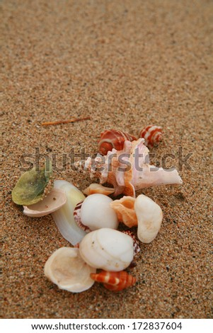beautiful shells on very nice beach, focus in on the shells (shallow DOF).