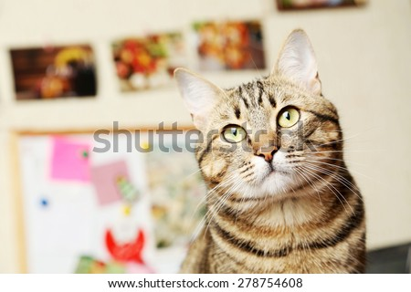 Beautiful shorthair cat - stock photo