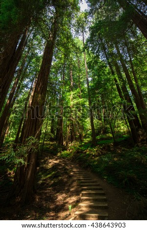 Beautiful shot of the deep woods full of green trees in the American West