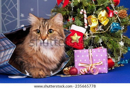 Beautiful siberian cat near Christmas spruce with gifts and toys - stock photo