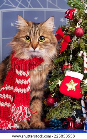 Beautiful siberian cat near Christmas spruce with gifts and toys over blue background - stock photo
