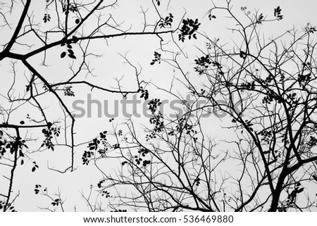 beautiful silhouette of leaf and twig tree