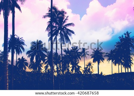 Beautiful Silhouette palm tree sunset time - Vintage Filter