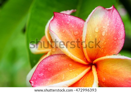 beautiful single flowers closeup nature background,flower macro image background soft focus.