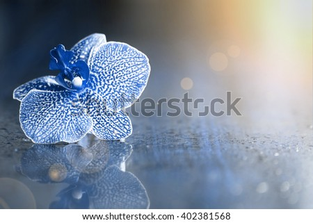 Beautiful single orchid flower background with copy space - stock photo