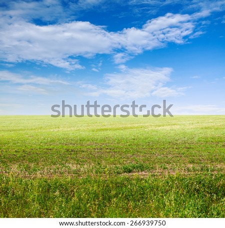 beautiful sky and green fields