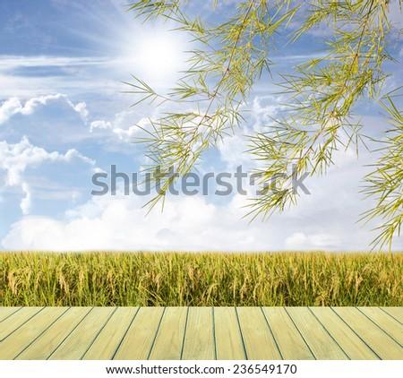 Beautiful sky and Rice field - stock photo