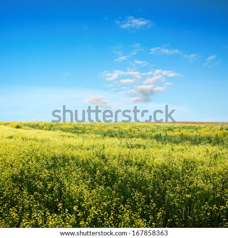 beautiful sky and yellow rapeseed field