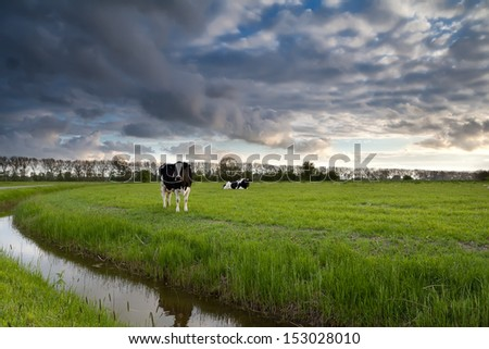 beautiful sky over pasture with cattle in summer - stock photo