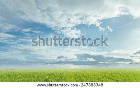 Beautiful skyscape. Light clouds on blue sky at summer sunny day over the green meadow - stock photo