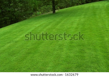 beautiful sloping backyard with vibrant green grass and tree in the background - stock photo